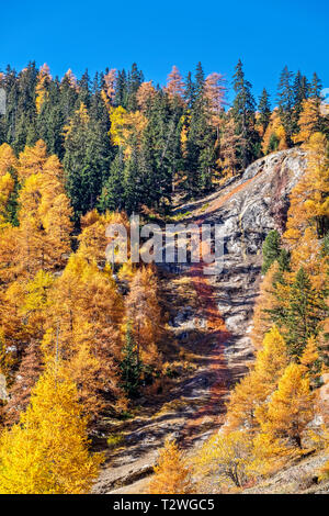 Italy, Valsavarenche, Gran Paradiso National Park, the ferruginous waters of the stream Eau Rousse; Norway Spruce and European larch forest in autumn - Stock Photo