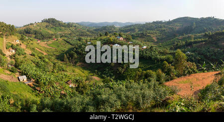 Banana and tea plantations in hill country north of Lake Bunyonyi in South West Uganda, East Africa - Stock Photo