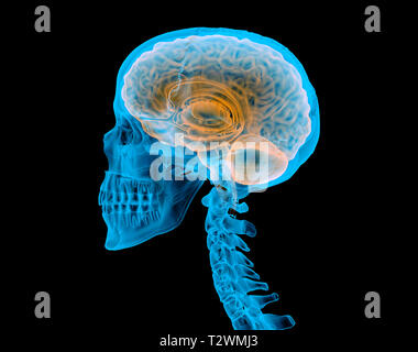 Human skull with brain. X-ray effect. Side view on black background. - Stock Photo