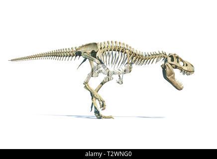 Tyrannosaurus Rex dinosaur photorealistic 3d rendering of full skeleton on white background. - Stock Photo