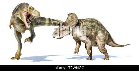 Tyrannosaurus rex dinosaur attacking a triceratops. Isolated on white background with dropped shadow. - Stock Photo