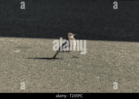 Bird in complete freedom. Low-Toned Photography taken in Colonia del Sacramente, Uruguay - Stock Photo