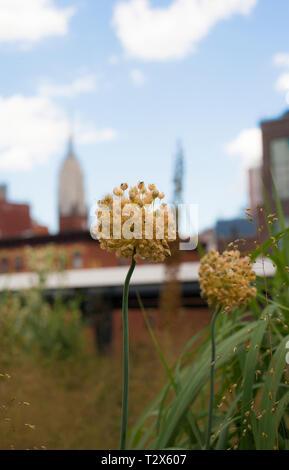 Highline Park NYC - Stock Photo