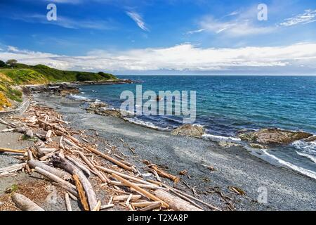 Scattered Driftwood on Pacific Ocean Beach Waterfront on Holland Point Park near Dallas Road in City of Victoria on Vancouver Island BC Canada - Stock Photo