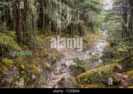In the forest on the way to the village of Woche, Gasa District, Snowman Trek, Bhutan - Stock Photo
