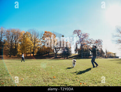 Father and son throwing football in field on sunny autumn day with dog - Stock Photo