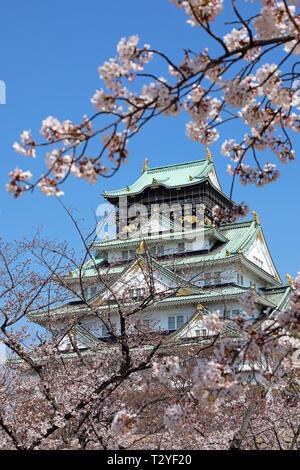 Osaka Castle seen through the branches of flowering cherry trees during Cherry Blossom season, Osaka, Japan - Stock Photo