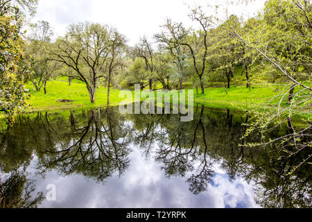Reflections Of Surrounding Trees In Small Foothills Pond - Stock Photo