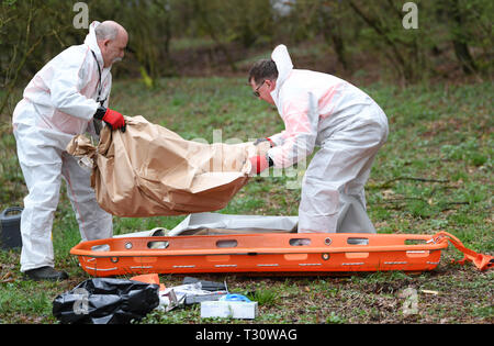 05 April 2019, Hessen, Aßlar-Bechlingen: During an animal health exercise to test a possible outbreak of African swine fever, two trained employees of the Landesbetriebs HessenForst (Hesse Forestry State Enterprise) recover a wild boar carcass. During a two-day exercise, the authorities want to prepare themselves for the possible outbreak of swine fever in this country. Photo: Arne Dedert/dpa - Stock Photo
