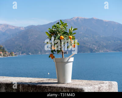 Image of little kumquat tree in a pot on a stone wall with lake and mountains in the background - Stock Photo