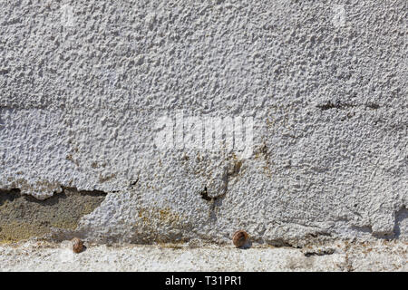 Two snails chose to sleep with each other on a rugged white wall. - Stock Photo
