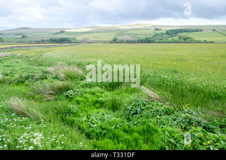 The traditional farming landscape of Hannah's Meadow Nature Reserve, part of the Durham Wildlife Trust in Teesdale, County Durham. - Stock Photo