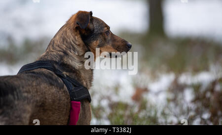 Portrait of a crossbreed dog in a winter forest - Stock Photo