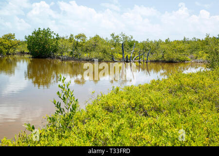 Inside Lagoon in Chinchorro Atoll, Banco Chinchorro, Caribbean Sea, Mexico - Stock Photo