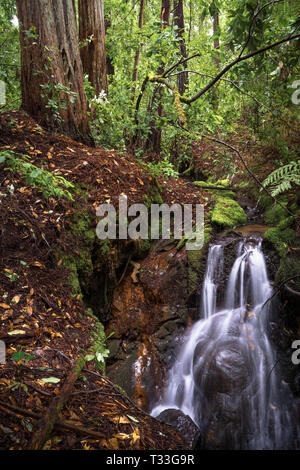 Redwoods and Spring Waterfall in Big Basin State Park, Santa Cruz Mountains - Stock Photo