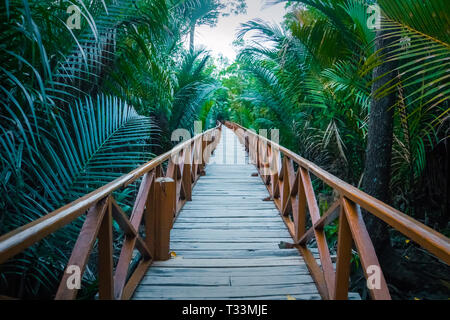 A long wooden bridge with a handrail passes through the dense undergrowth of the jungle. Along the edges are long green palm branches in leaves. persp - Stock Photo