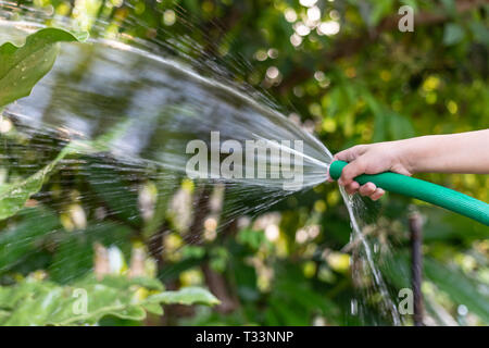 Children are watering plants with rubber hose in the garden. - Stock Photo