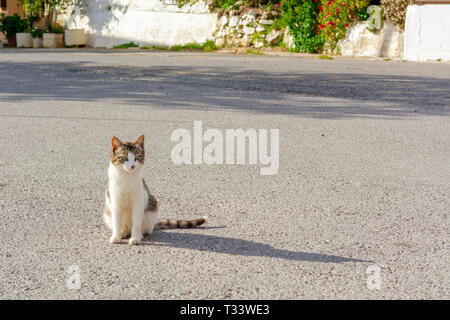 The cat sits on the street and basks in the sun. Crete, Greece - Stock Photo