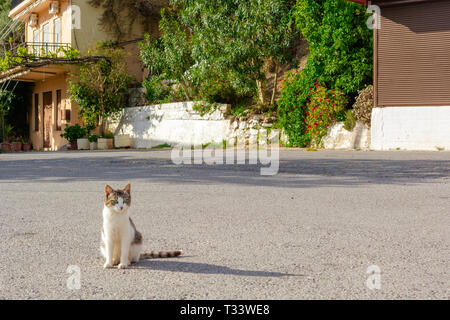 The cat sits on the street and basks in the sun. Traditional Greek village in the mountains of Crete, Greece. - Stock Photo