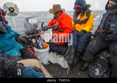 Alison Lee Cusick a scientist working on citizen science on an Antarctic cruise ship with passengers on a zodiac - Stock Photo