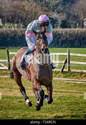 Horse and jockey at full-gallop during a point-to-point event - Stock Photo