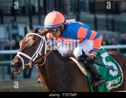 South Ozone Park, NY, USA. 6th Apr, 2019. New York, U.S. - April 6, 2019: Always Shopping, ridden by Manny Franco, wins the 2019 running of the G2 Gazelle at Aqueduct Racecourse in South Ozone Park, NY. Sophie Shore/ESW/CSM/Alamy Live News - Stock Photo