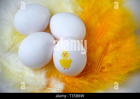 Eggs for Easter breakfast on yellow feathers. One egg has a cute yellow chicken painted on it - Stock Photo