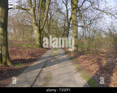 Alley trees in Mecklenburg-Western Pomerania with partly paved road (concrete panels). Horse chestnut tree [Aesculus hippocastanum] - Stock Photo