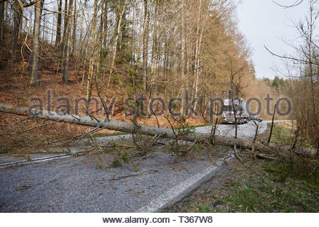 A tree that has fallen on the road and blocked the passage for cars, northern Poland. - Stock Photo