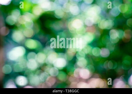 Real fresh nature green blurry and bokeh background. Bangkok Thailand. - Stock Photo