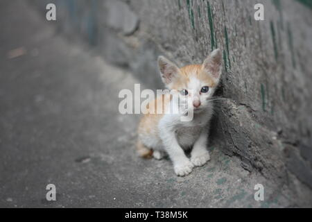 poor alone white orange kitty - cat without mom standing beside the dirty wall near by canal. - Stock Photo