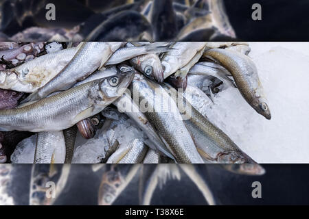 Close up, Fresh organic fishes sprat on ice on fresh market,  background. Sea fishes texture . A lot of organic sea sprat - Stock Photo