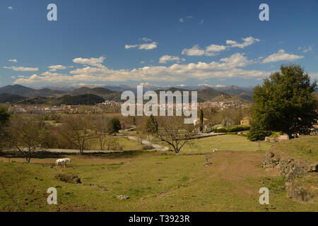 A white horse in a field with mountains behind, at Olot, in the foothills of the Spanish Pyrenees. - Stock Photo