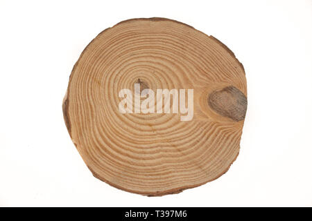 Wooden stump isolated on the white background. Round cut down tree with annual rings as a wood texture. - Stock Photo