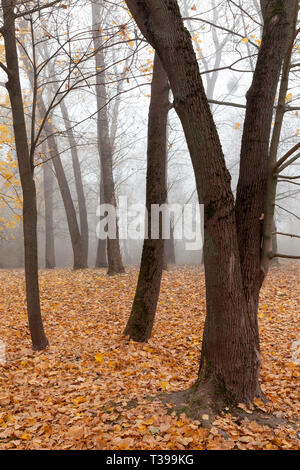 late autumn in the park, foggy weather cloudy weather, foliage dropped from trees - Stock Photo
