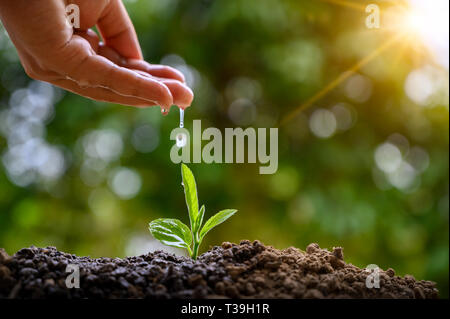 In the hands of trees growing seedlings. Bokeh green Background Female hand holding tree on nature field grass Forest conservation concept - Stock Photo