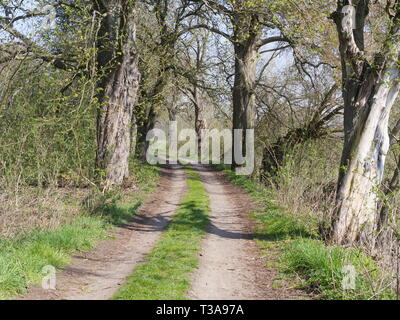 Alley trees in Mecklenburg-Western Pomerania - Stock Photo