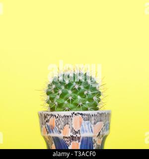 Small mammillaria cactus in a small decorative ceramic planter. - Stock Photo