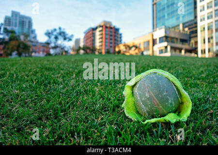 Chewed up tennis ball laying on the lawn of an urban park in San Diego. - Stock Photo