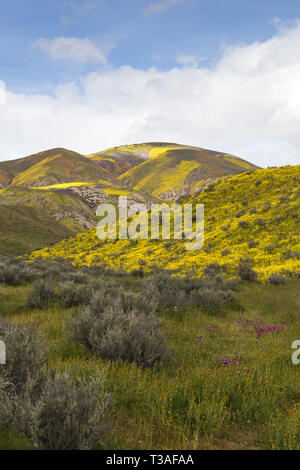 California wildflower super bloom at the Carrizo plain National monument in San Luis Obispo County, - Stock Photo