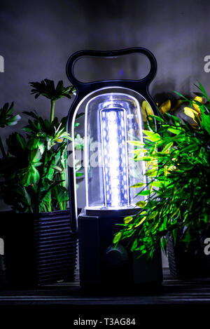 Glowing LED lantern illuminating on a desk with some green and yellow flowers - Stock Photo