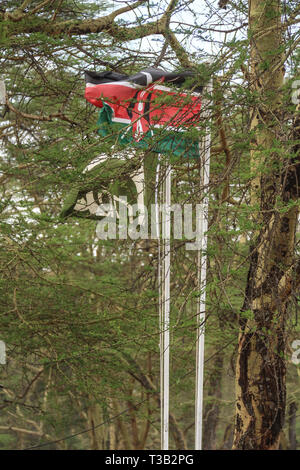 Nakuru, Rift Valley, Kenya. 3rd Mar, 2019. Kenyan flag is seen flying beside that of Kenya Wildlife Service at Lake Nakuru National Park located about 150km Northwest of Nairobi capital.More than ten buffaloes have been reported dead as a result of an anthrax outbreak. Anthrax is an infectious disease that affects cattle and wild game, humans can become infected through contact with an infected animal. A Park official has blamed current dry weather for the outbreak; at risk of infection is the near threatened Southern white rhinoceros. (Credit Image: © James Wakibia/SOPA Images via ZUMA W - Stock Photo