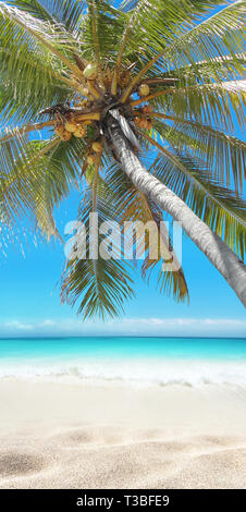 Coconut palm tree hanging over the sandy beach. Tropical island paradise. Bright turquoise ocean water. Sandy shore washing by the wave. Dreams summer - Stock Photo