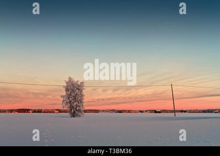 The winter sun sets behind a tree covered with frost in the rural Finland. It's only afternoon, but soon it will be very dark. - Stock Photo