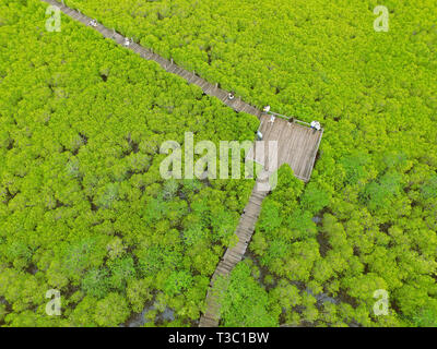 Drone Photography of the Bird Eye View of Spurred Mangrove Forest with Many Visitors Enjoy the View on Wooden boardwalk, Rayong, Thailand - Stock Photo