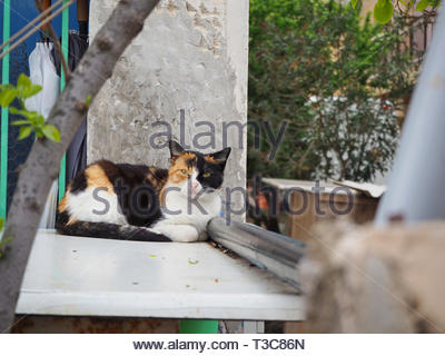 multi color stray cat relaxing - Stock Photo