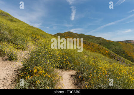 Beautiful superbloom vista in a mountain range near Lake Elsinore, Southern California - Stock Photo