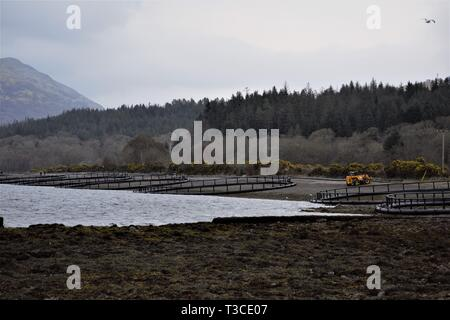 Construction of Fusion Marine, HDPE, floating, salmon fish pen cages on the shores of Loch Creran. Trees in the background. - Stock Photo