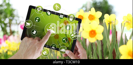 gardening equipment e-commerce concept, online shopping on digital tablet, hand pointing and touch screen with green tools icons, on spring flower pla - Stock Photo