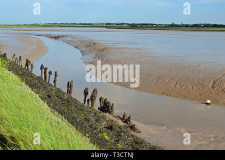The Hen Reedbeds, Southwold, Suffolk, UK - Stock Photo